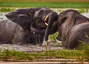 Fotos Elefanten Wasser 2 Schlägerei Tiere