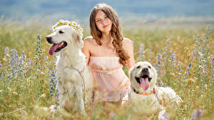 Pictures Fields Dogs Little girls Glance 2 Retriever Tongue child Animals