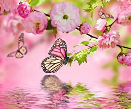 Fotos Blühende Bäume Schmetterlinge Wasser Ast Blumen
