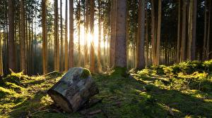 Wallpapers Forests Trees Tree stump Nature