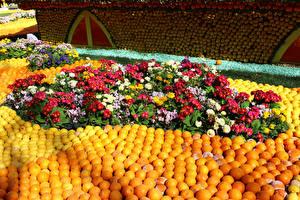 Desktop wallpapers France Park Orange fruit Primula Ranunculus Design Lemon Festival Menton flower
