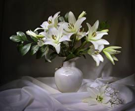 Hintergrundbilder Lilien Vase Weiß Blumen