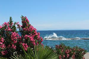 Wallpaper Opatija Croatia Oleander Sea Waves Berth Nature