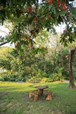 Sfondi desktop Thailandia Bangkok Parco Di ramo Tavolo Panchina Natura