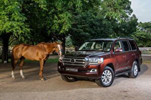 Hintergrundbilder Toyota Pferd Braun SUV 2015-18 Land Cruiser 200 VX-R automobil Tiere