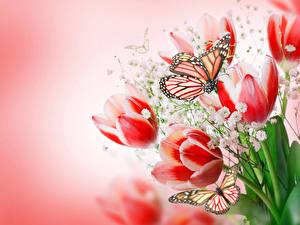Bilder Tulpen Schmetterlinge Monarchfalter Farbigen hintergrund Blumen