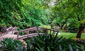 Bilder Australien Park Brücken Bäume Alfred Nicholas Memorial Gardens Sherbrooke Natur