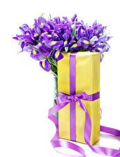 Bilder Sträuße Schwertlilien Weißer hintergrund Geschenke Schleife Blüte