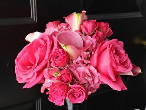 Hintergrundbilder Blumensträuße Rose Calla palustris Rosa Farbe Blüte