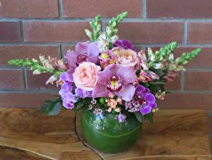 Fotos Sträuße Rosen Orchideen Löwenmäuler Vase