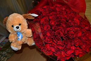 Fondos de escritorio Ramos Rosas Osito de peluche Rojo flor