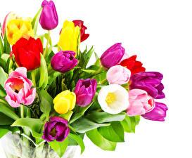 Fotos Sträuße Tulpen Großansicht Weißer hintergrund Blumen