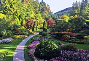 Sfondi desktop Canada Giardini Disegno Avenue Cespugli Alberi Butchart Gardens Natura