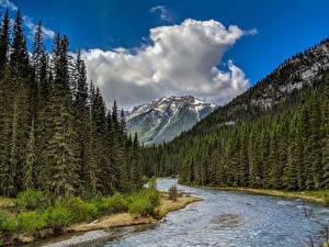 Bilder Kanada Park Wälder Flusse Gebirge Landschaftsfotografie Banff Fichten Natur