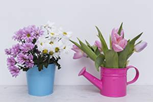 Fotos Chrysanthemen Tulpen Eimer Grauer Hintergrund Blumen
