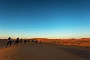 Hintergrundbilder Wüste Sonnenaufgänge und Sonnenuntergänge Altweltkamele Sand Natur