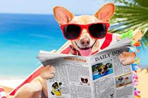 Picture Dogs Chihuahua Eyeglasses Newspaper Tongue Funny Animals