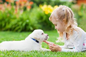 Wallpapers Dogs Little girls Puppy Hands Children