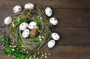 Hintergrundbilder Ostern Ei Nest das Essen