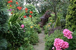 Hintergrundbilder England Garten Flammenblumen Strauch Walsall Garden Natur