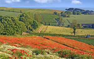 Hintergrundbilder England Landschaftsfotografie Acker Mohn Bäume Budleigh Salterton