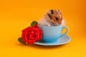 Fotos Hamster Rosen Farbigen hintergrund Tasse Rot Tiere Blumen