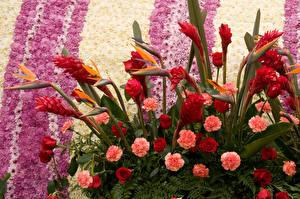 Bilder Rosen Nelken Chrysanthemen