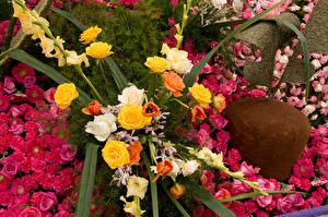 Bilder Rosen Tulpen Nelken Löwenmäuler Pasadena