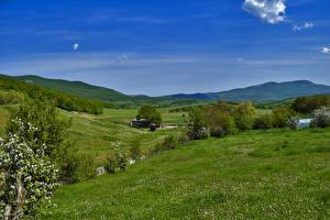 Bilder Russland Krim Landschaftsfotografie Felder Blühende Bäume Hügel Gras Natur