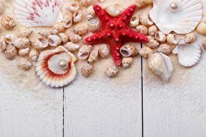 Fotos Muscheln Seesterne Perlen