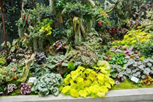Fotos Singapur Garten Buntnesseln Kaladien Gardens by The Bay Natur