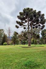 Hintergrundbilder Sri Lanka Parks Rasen Bäume Queen Victoria Park Natur