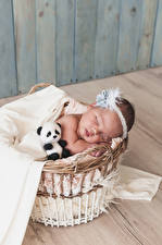 Bilder Teddybär Weidenkorb Säugling Schlaf Kinder