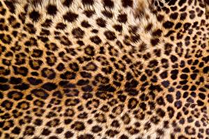 Pictures Texture Leopards