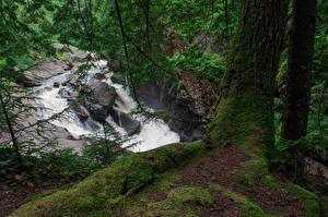 Fotos USA Wasserfall Ast Laubmoose Baumstamm Auger Falls Natur