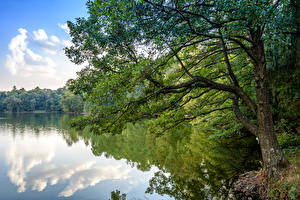 Pictures Ukraine Park River Trees Trostianets Nature