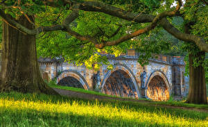 Wallpaper United Kingdom Bridges Sculptures Branches Grass Chatsworth Nature