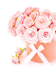 Wallpapers Bouquets Rose White background Pink color Bowknot Flowers
