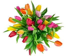 Fotos Sträuße Tulpen Weißer hintergrund Mehrfarbige Blumen