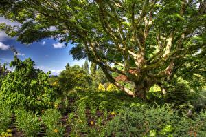 Hintergrundbilder Kanada Park HDR Bäume Strauch Queen Elizabeth Park