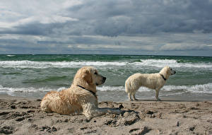 Image Coast Waves Dogs Two Animals