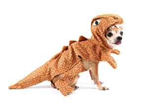 Hintergrundbilder Hunde Dinosaurier Weißer hintergrund Chihuahua Uniform