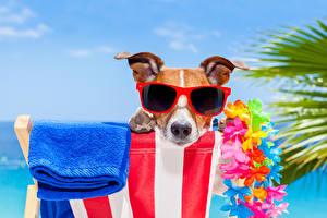 Wallpapers Dogs Towel Jack Russell terrier Eyeglasses Snout