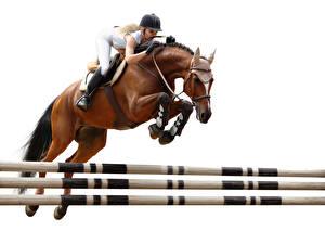 Hintergrundbilder Pferdesport Pferd Sprung Helm Weißer hintergrund sportliches Mädchens
