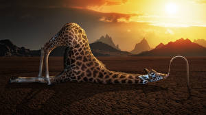 Pictures Giraffes Funny 3D Graphics