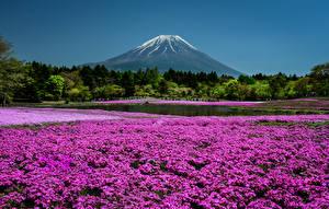 デスクトップの壁紙、、日本、京都市、公園、フロックス、山、池、自然