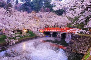 壁纸、、日本、東京都、公園、花の咲く木、川、橋、夕、自然