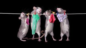 Wallpaper Mice Black background Panties Funny Animals