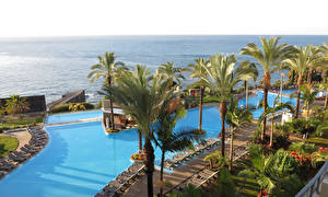 Images Portugal Tropics Resorts Swimming bath Palm trees Sunlounger Funchal Madeira Islands Nature