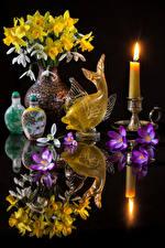 Images Still-life Narcissus Galanthus Primula Candles Fish Black background Reflection Vase